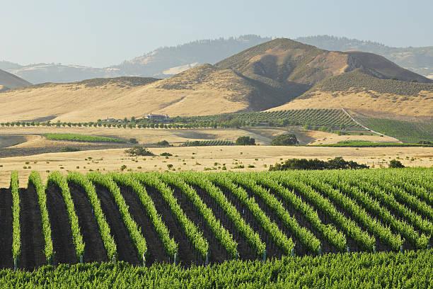 Santa Barbara Vineyard stock photo