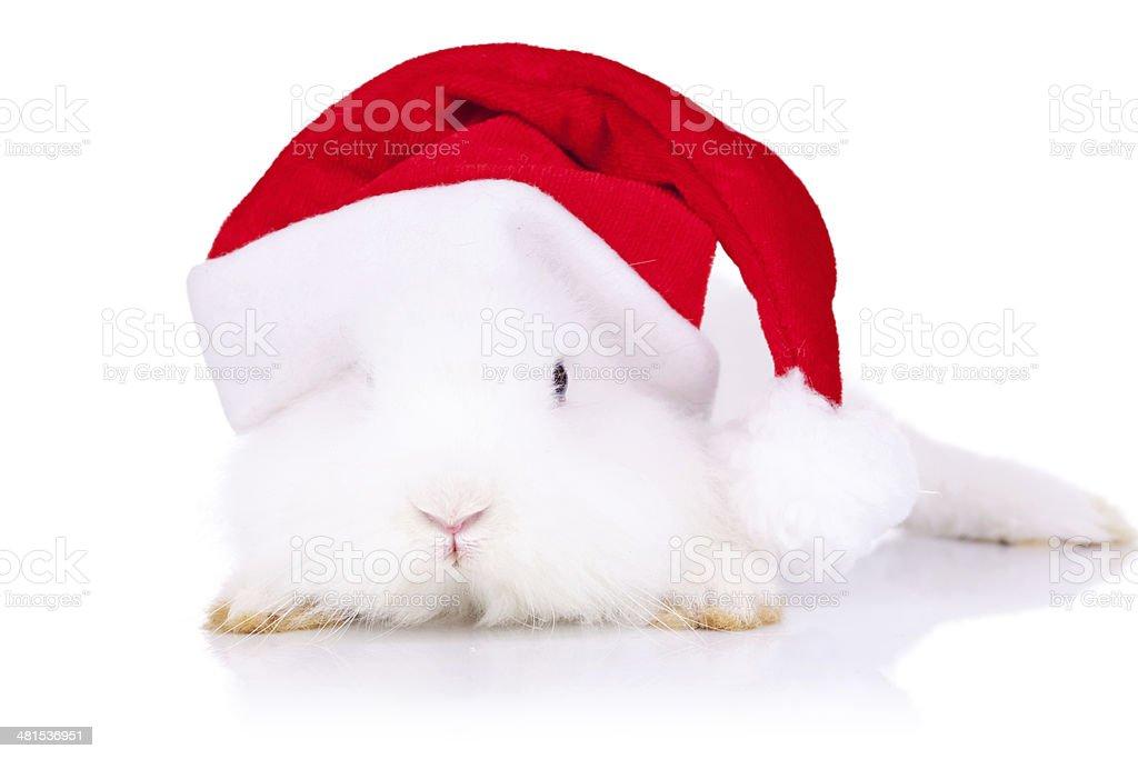 santa bunny looking to the camera royalty-free stock photo