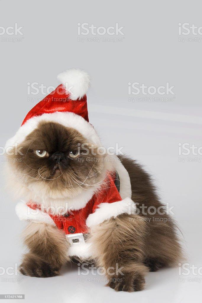 santa cat, royalty-free stock photo