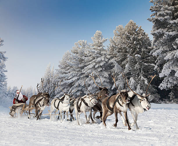 Santa Claus and his reindeer in forest - Photo