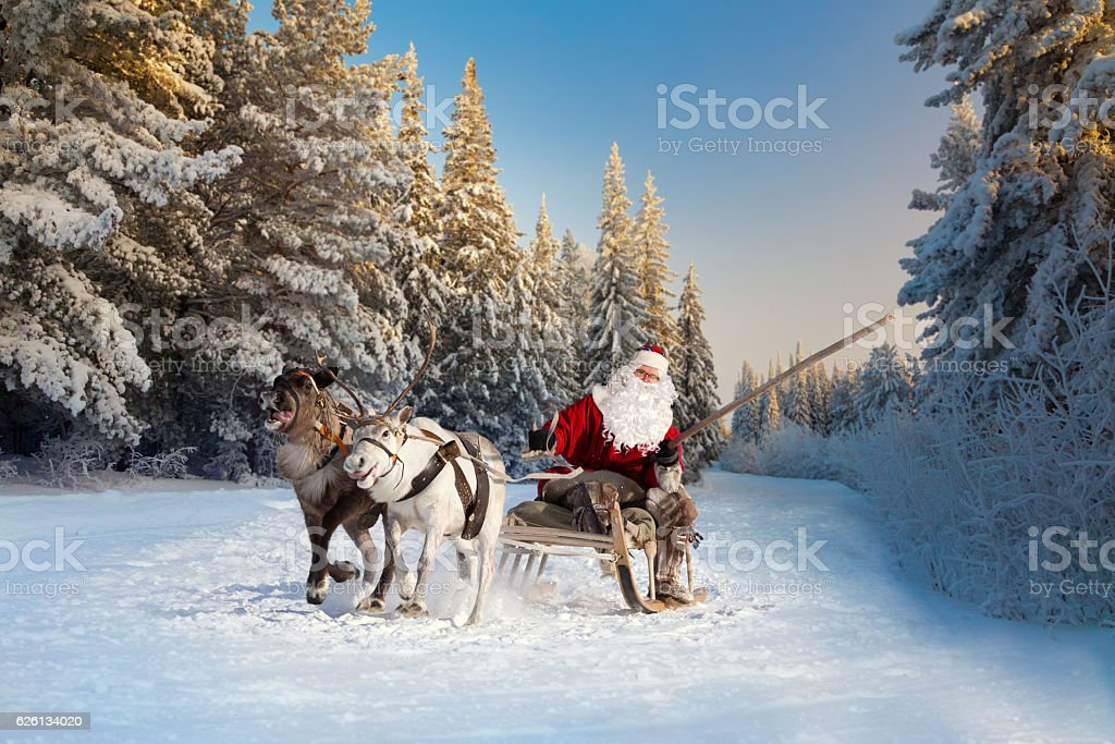 Santa Claus and his reindeer in forest - foto de stock