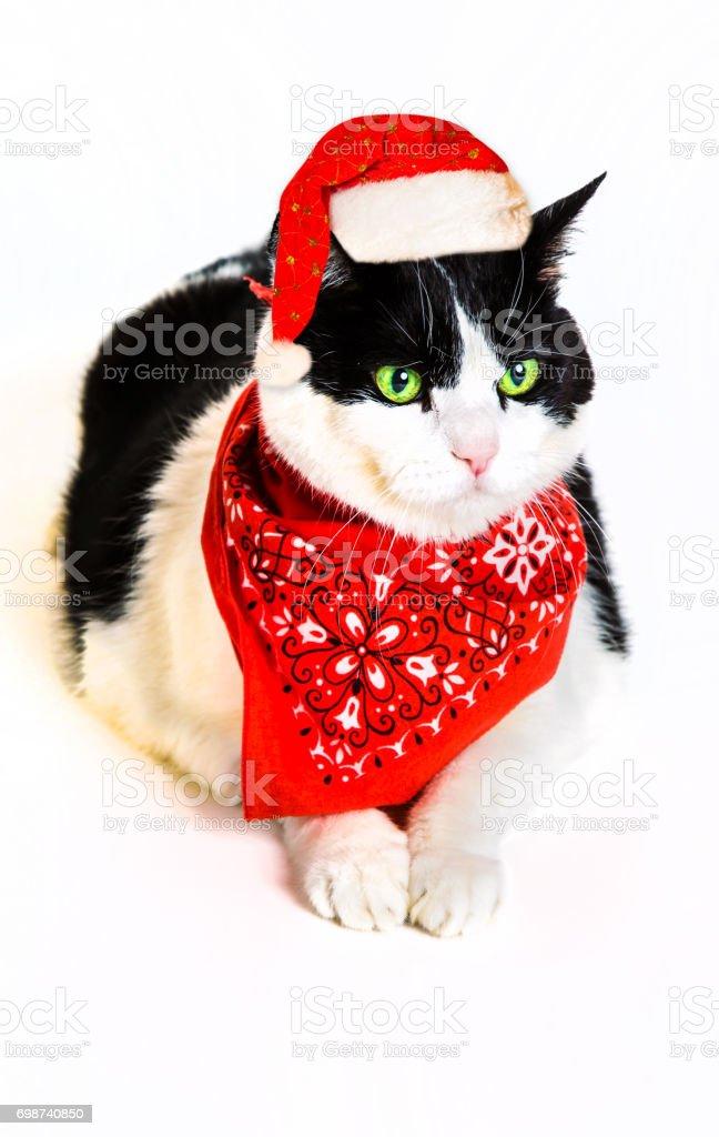 Santa Claus Cat - foto stock