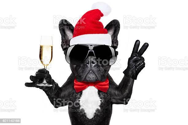 Santa claus christmas dog picture id621140166?b=1&k=6&m=621140166&s=612x612&h=viflc8vxr7rcnsyl4szwy2q5ot9wgd33zf0mvxcy 2s=