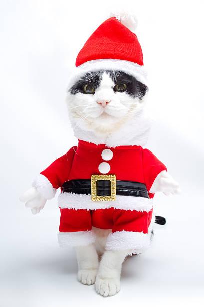 Santa claus dressed kitten picture id629868740?b=1&k=6&m=629868740&s=612x612&w=0&h=eeawlghhxoe0p227jw2j3pjsclq3ccgimif4ydmrdpe=