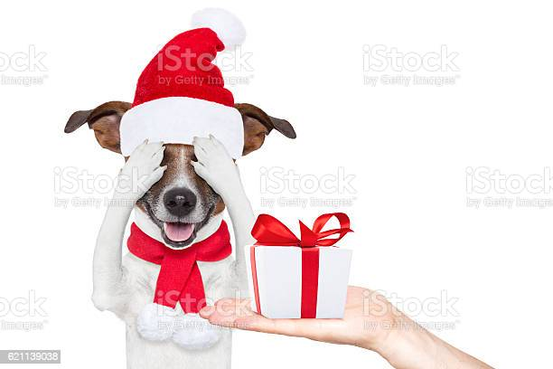 Santa claus excited and surprised dog picture id621139038?b=1&k=6&m=621139038&s=612x612&h=almckcixxamz1tatx 8j1bbelkr9af64guumljgta u=