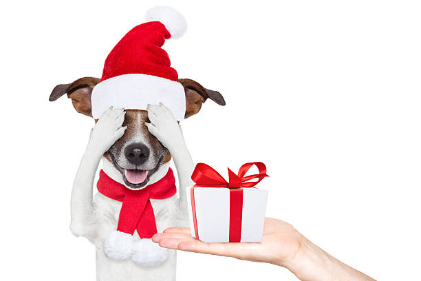 Santa claus excited and surprised dog picture id621139038?b=1&k=6&m=621139038&s=612x612&w=0&h=xv3fgh4wznjwddmesp2myhkji3mrdt7pi ipmtwokeu=