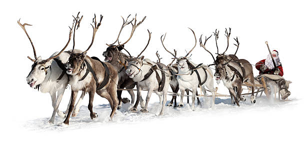 santa claus in a sleigh - rendier stockfoto's en -beelden