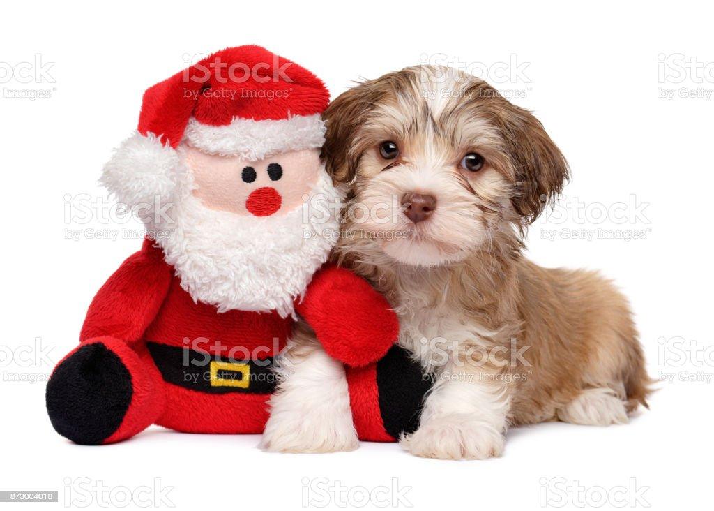 Santa Claus is my friend stock photo