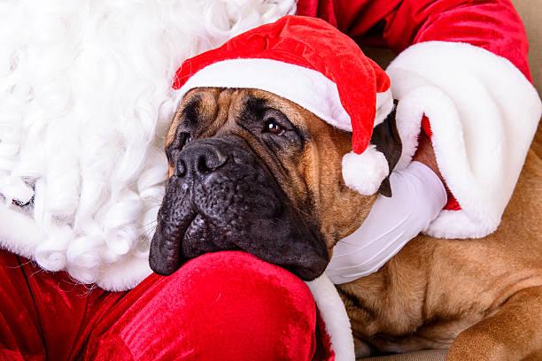Santa Claus con perro - foto de stock