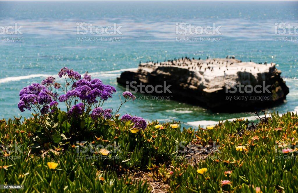 Santa Cruz seaside stock photo