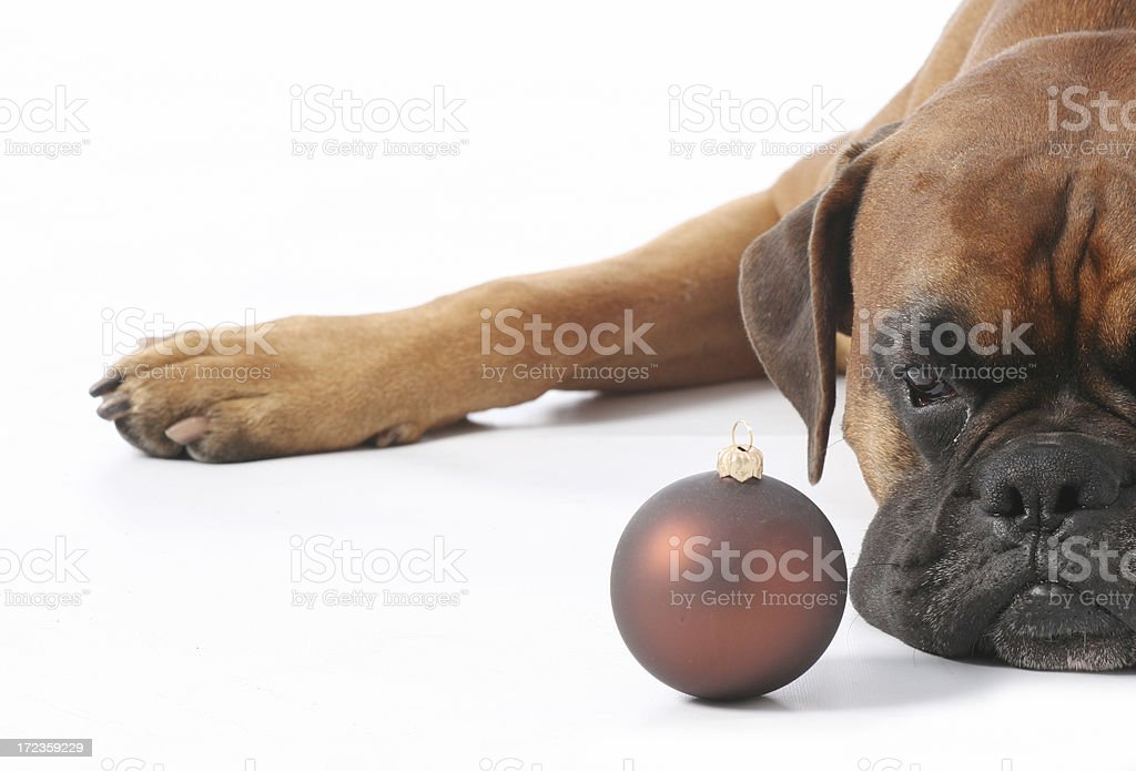 Santa dog royalty-free stock photo