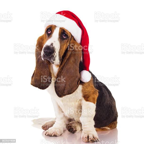 Santa dog picture id502531608?b=1&k=6&m=502531608&s=612x612&h=llm9gzkcimysavu2 ue0rsbdya142uat6hv4kx5nyie=