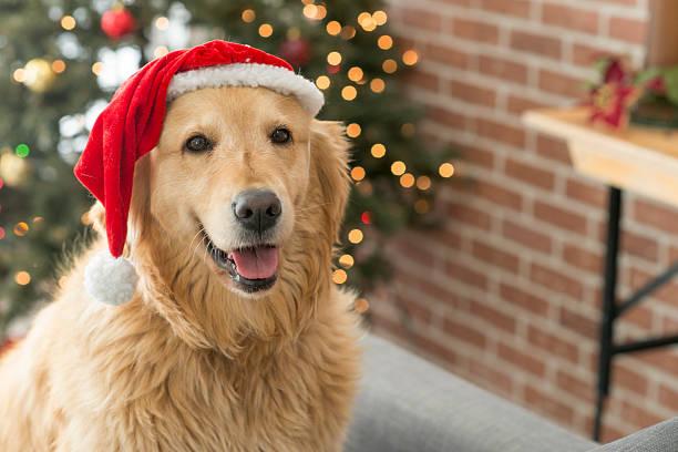 Santa dog picture id615746002?b=1&k=6&m=615746002&s=612x612&w=0&h=dltgknbc5etv0iod5crtfivjuacwqjcppf8 5m oxiy=