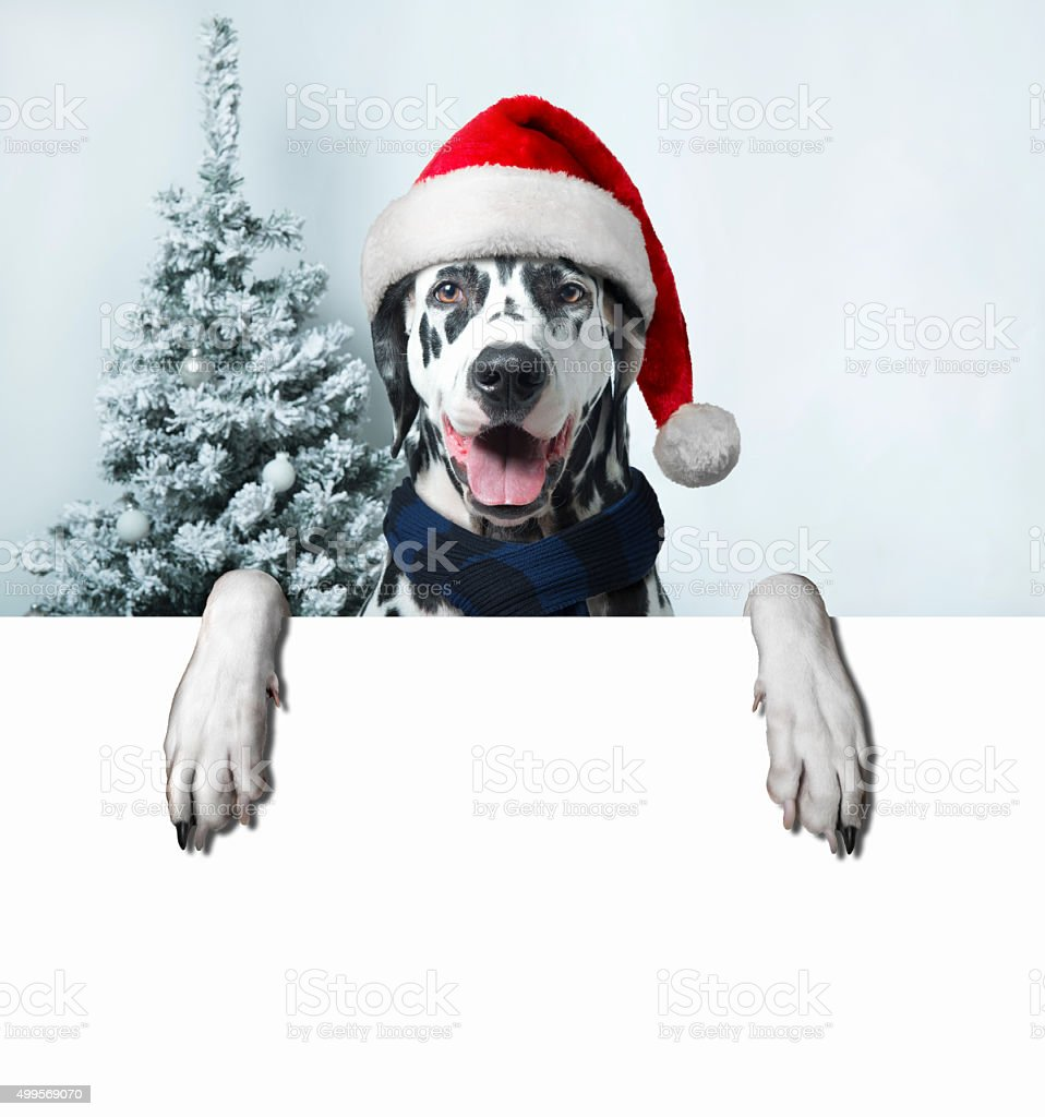Babbo Natale Zampa.Babbo Natale Con Palla Per Cane Zampa E Un Campanello Fotografie