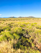 Santa Fe, NM: A field full of chamisa/rabbit grass and field grasses; blue sky background with copy space.