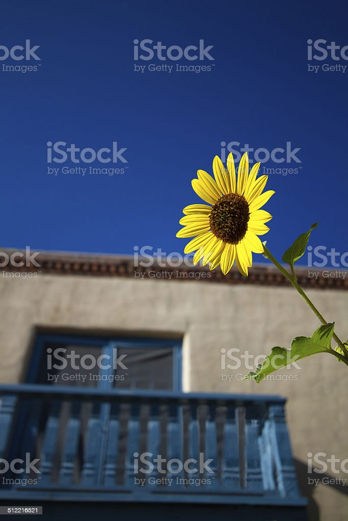 Santa Fe Style: Sunflower and Old Blue Balcony stock photo
