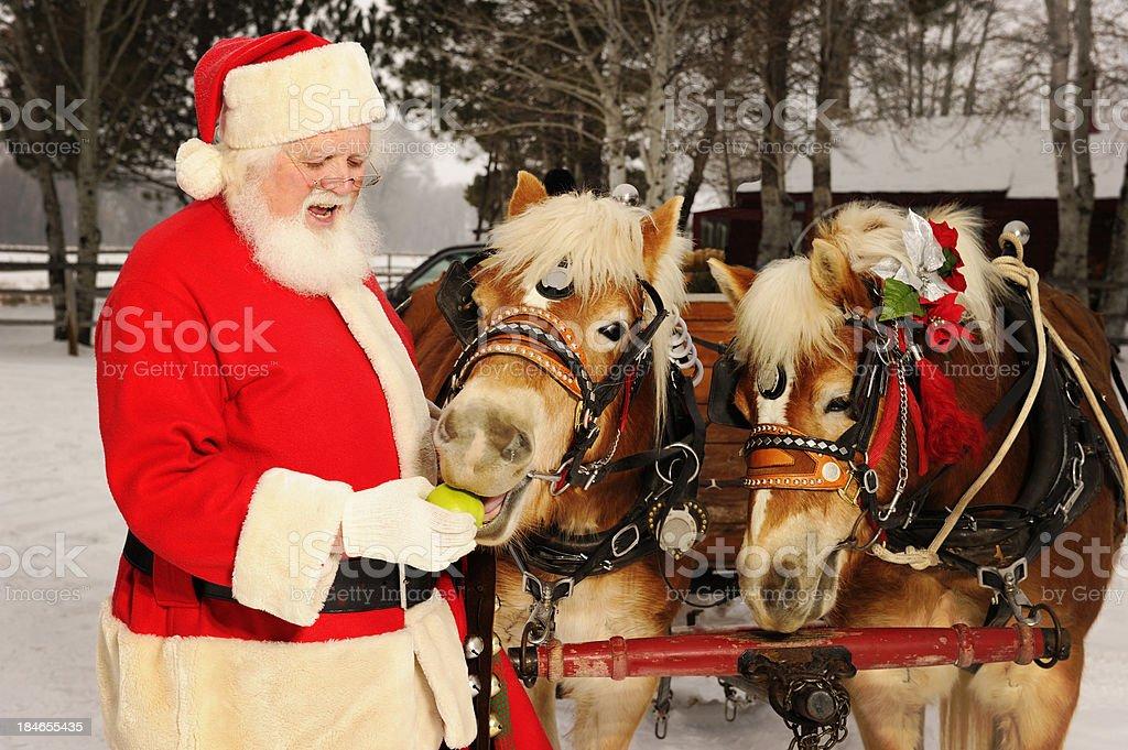 Santa Feeding His Team of Horses Green Apples royalty-free stock photo