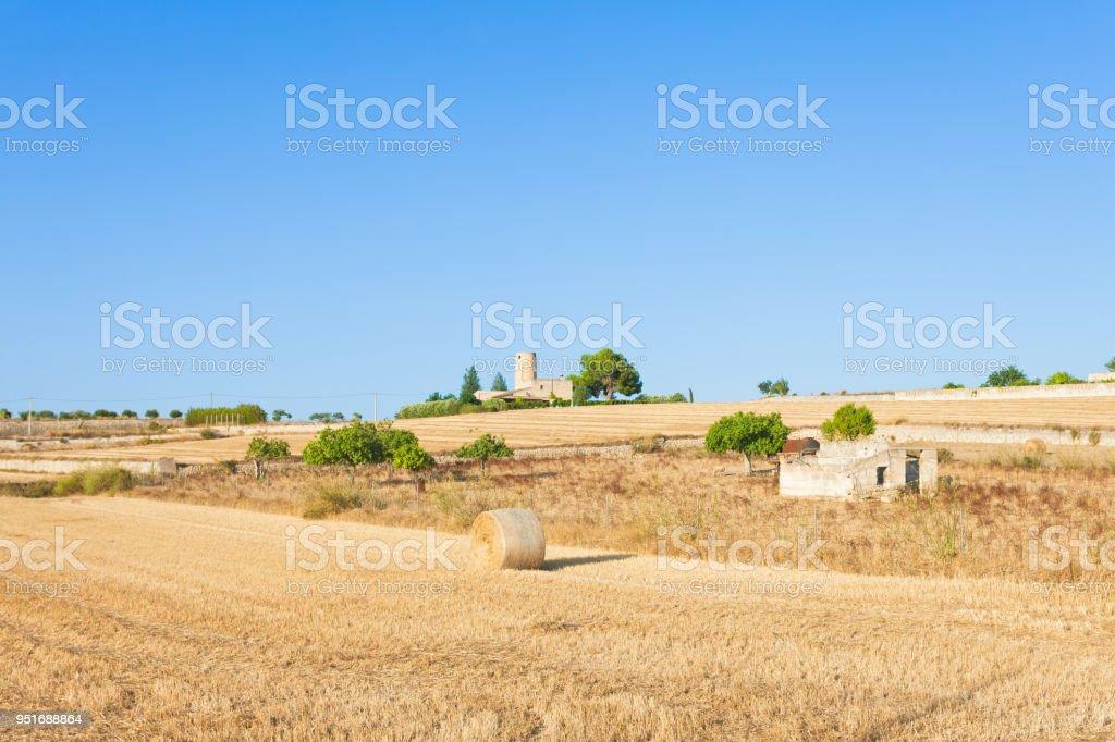 Santa Margalida, Mallorca - Heu Ertrag auf den Feldern von Mallorca – Foto