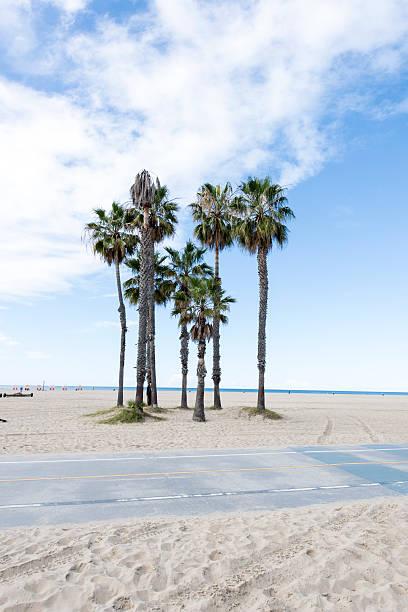 Santa Monica Beach Rower drogi i drzew palmowych – zdjęcie