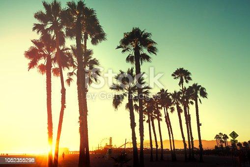 Beautiful sunset through the palm trees. Santa Monica beach, California, USA