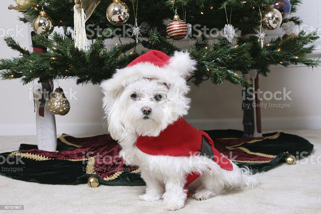 Santa Puppy royalty-free stock photo