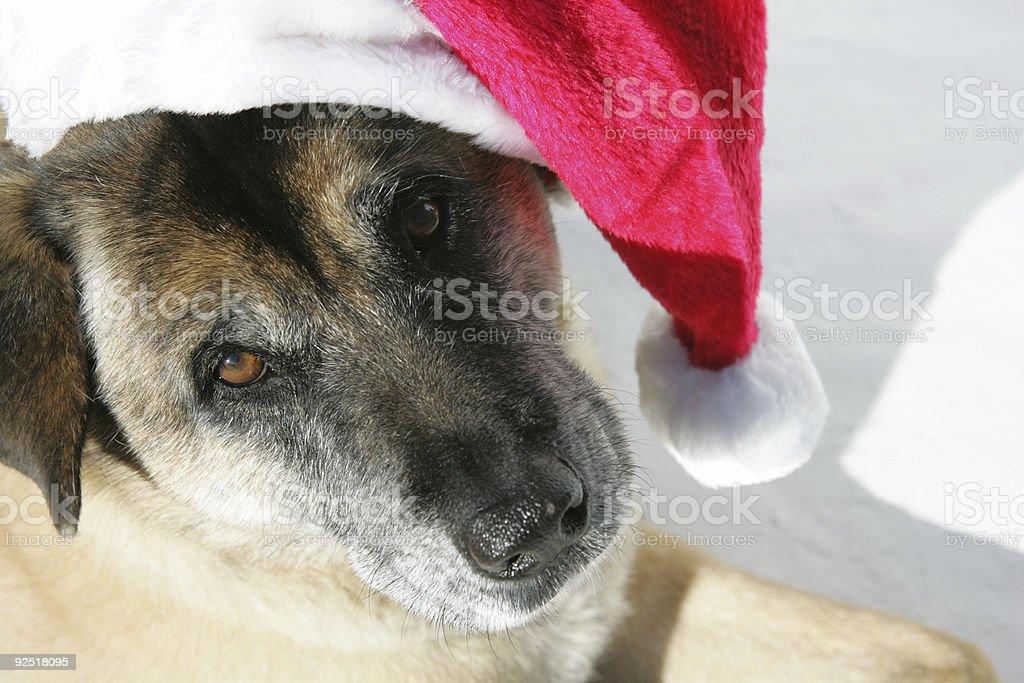 Santa's Helper royalty-free stock photo