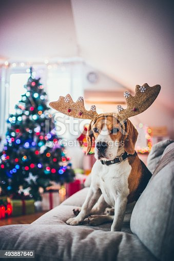 istock Santa's little reindeer 493887640