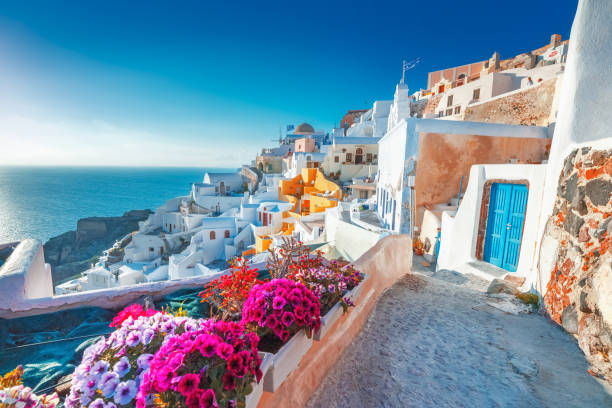 santorini, greece. picturesq view of traditional cycladic santorini houses on small street with flowers in foreground. location: oia village, santorini, greece. vacations background. - destination stock pictures, royalty-free photos & images