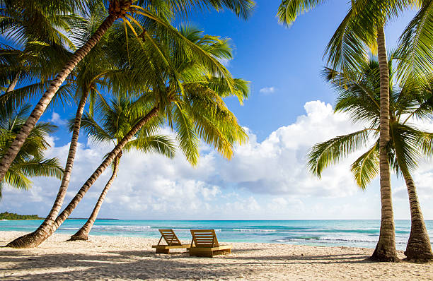 saona island beach - caribbean stock pictures, royalty-free photos & images