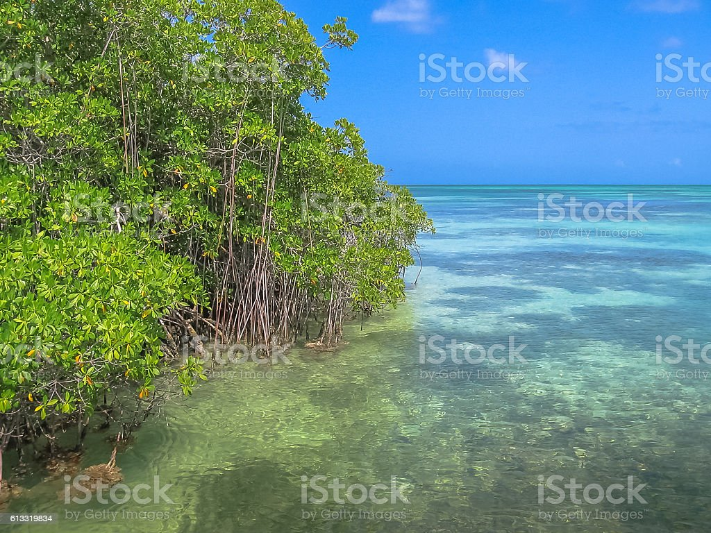 Saona Island Mangrove stock photo
