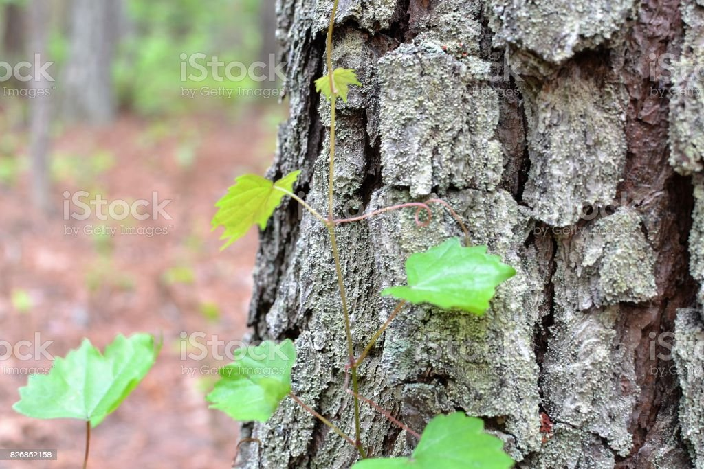 sapling at the base stock photo