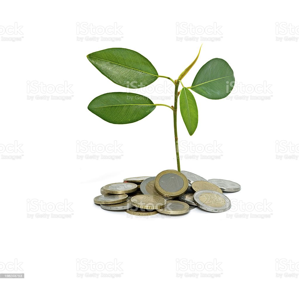 sapling growing from pile of coins stock photo