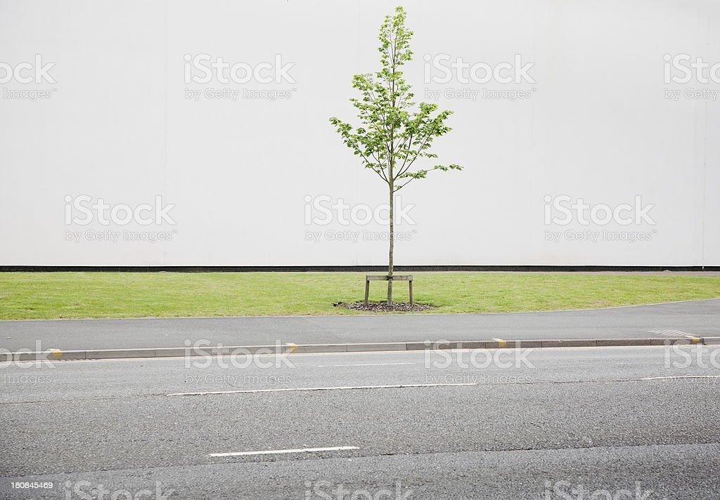 Sapling next to road royalty-free stock photo