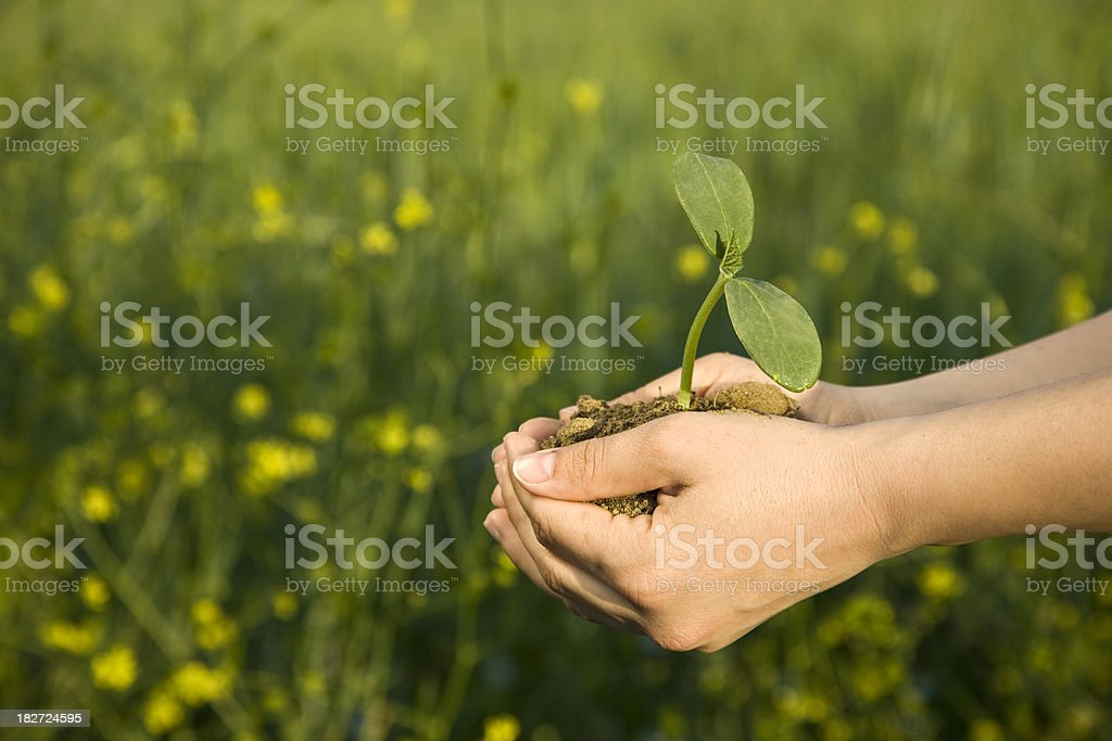 sapling outdoors royalty-free stock photo