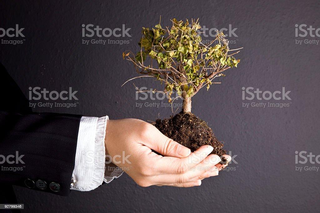 sapling royalty-free stock photo