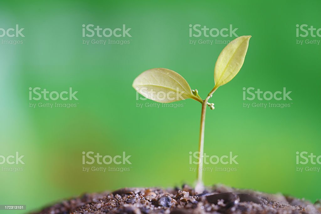 Sapling with out of focus garden royalty-free stock photo