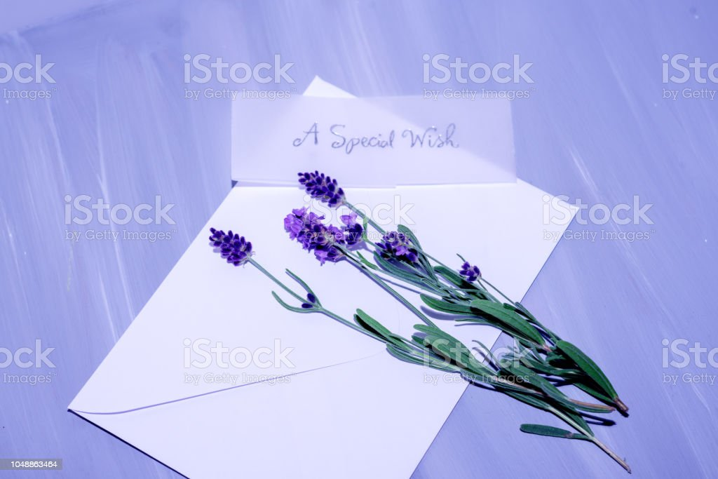 Saplings of aromatic lavender and empty space for best wishes stock photo