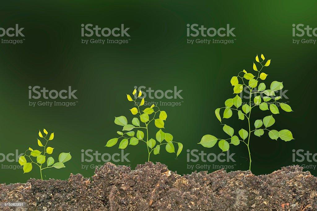 Saplings on soil stock photo
