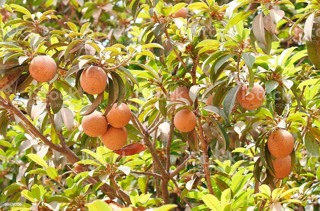 Sapodilla fruit royalty-free stock photo