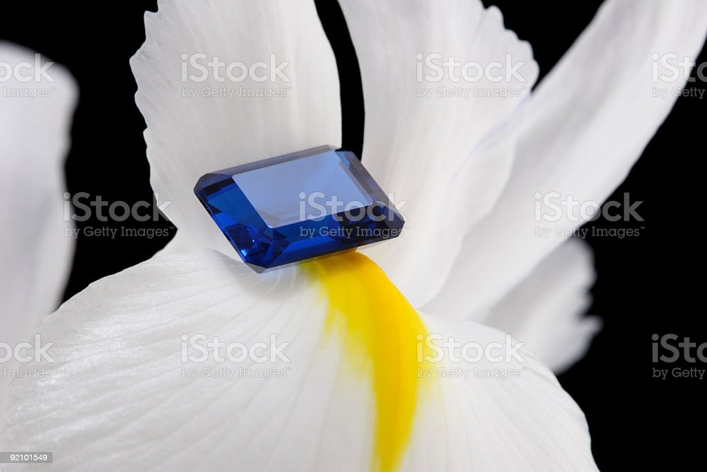 Sapphire on Iris Flower royalty-free stock photo