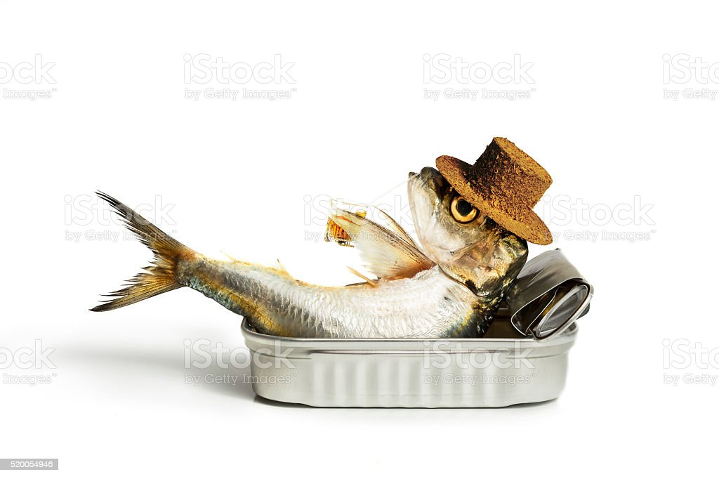 Sardine chilling out stock photo