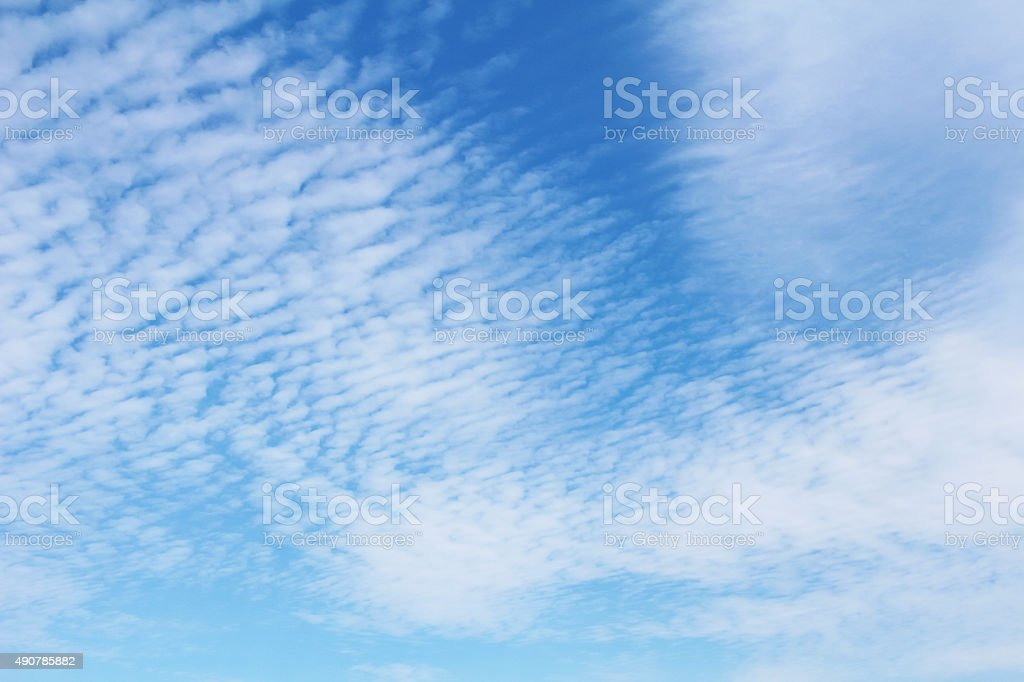 Sardine cloud stock photo