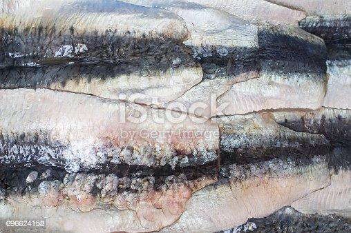 Sardine filets from Northeast Atlantic, Spain. Closeup