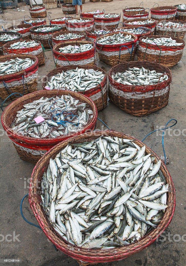 paniers de sardines stock photo