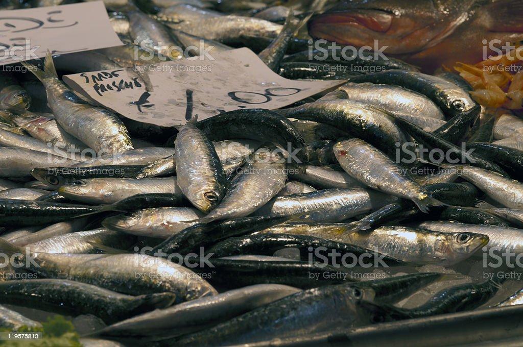 Sardines royalty-free stock photo