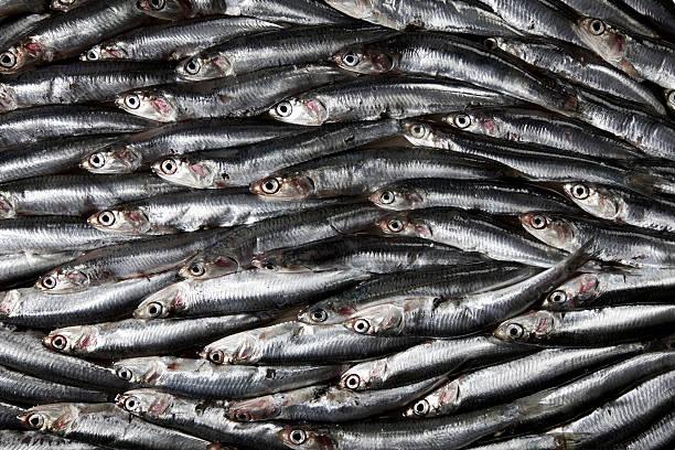 sardinhas - meat texture imagens e fotografias de stock