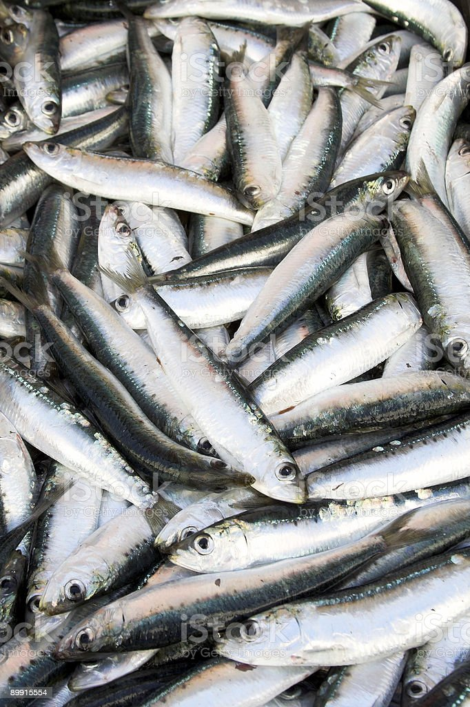 sardines stock photo more pictures of anchovy istock