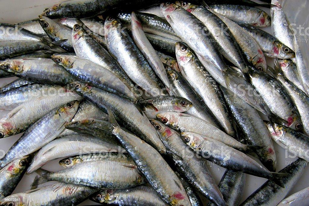 Sardine foto stock royalty-free