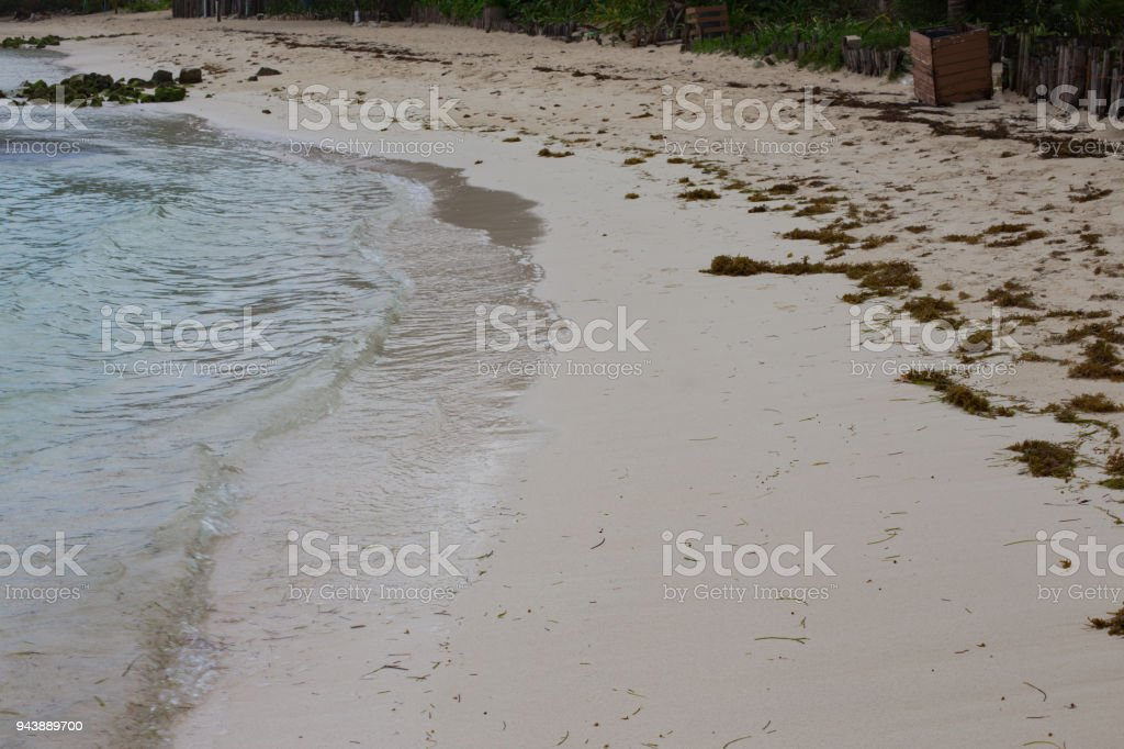 Sargassum Seaweed Algae Washed Up On A White Sandy Beach In Mexico Stock  Photo - Download Image Now