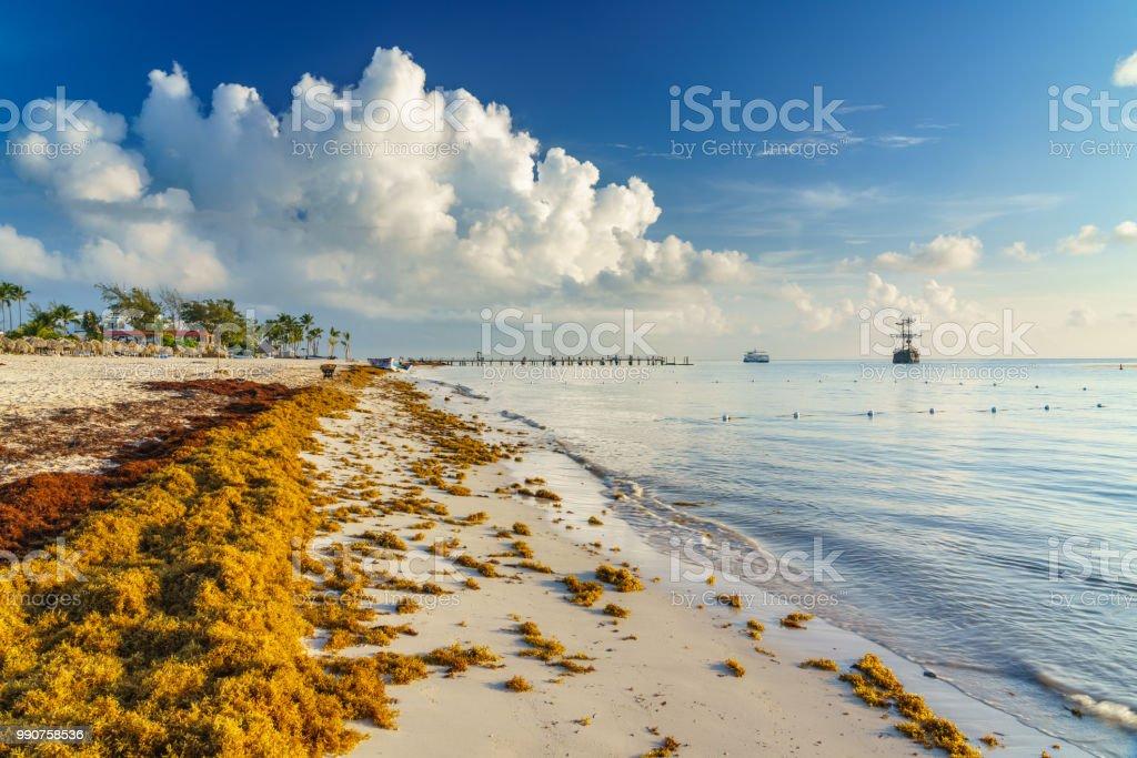 Punta Cana Dominican Republic June 17 2018 Sargassum Seaweeds On The